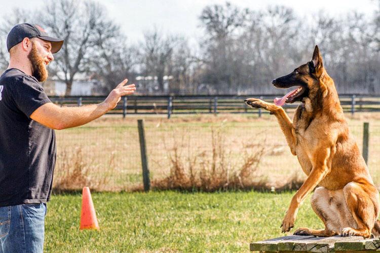 Image result for Dog Training